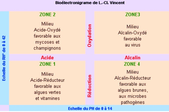 Bioélectronnigramme de Louis Claude Vincent
